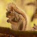Squirrel Having a Snack! by rickster549