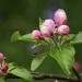 Blossom and Bug by shepherdman