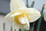 18th Apr 2020 - Flower Confection