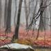 Mist and Rain on April 18th by olivetreeann