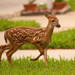 Baby Fawn! by rickster549