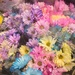 Flowers at the grocery store  by kchuk