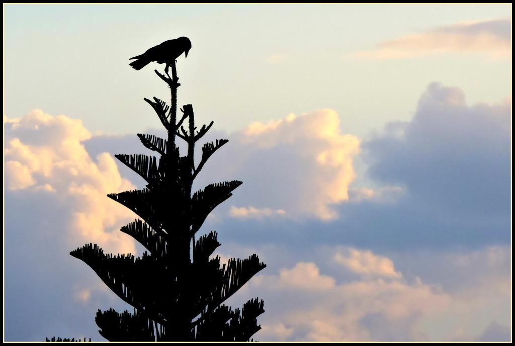 Evening Silhouette  by ubobohobo