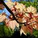 Backlit Leaves by carole_sandford