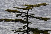 18th Apr 2020 - Flat Tree
