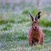 What's going on Hare then? by stevejacob