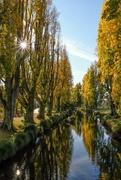 20th Apr 2020 - Autumn poplars