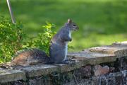 20th Apr 2020 - Squirrel