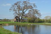 11th Apr 2020 - Duck Pond
