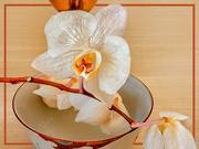 21st Apr 2020 - Orchids