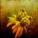 Cone Flowers by ludwigsdiana