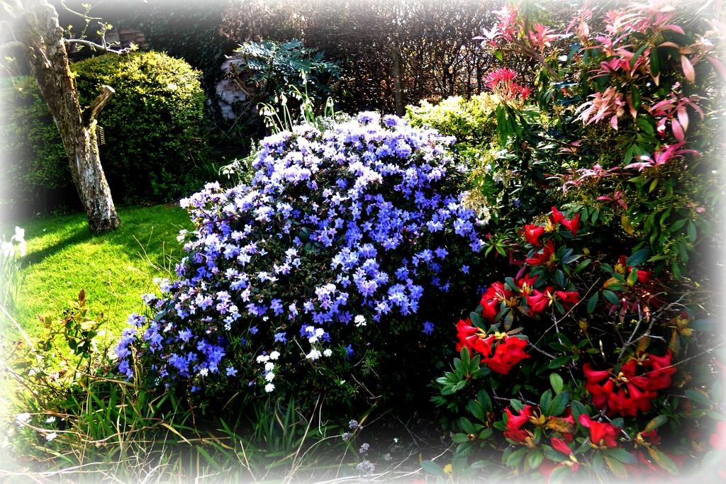 In Jean's garden  by beryl