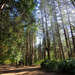 A Walk In The Woods by seattlite