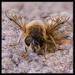 A sense of Bee-attitude by ellida