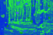 21st Apr 2020 - Bluebell Wood