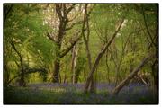 21st Apr 2020 - Stonyhill Woods