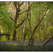 Stonyhill Woods by fbailey