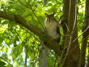 21st Apr 2020 - Squirrel in Tree