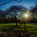 Sunset Shadows at Inniswood by ggshearron