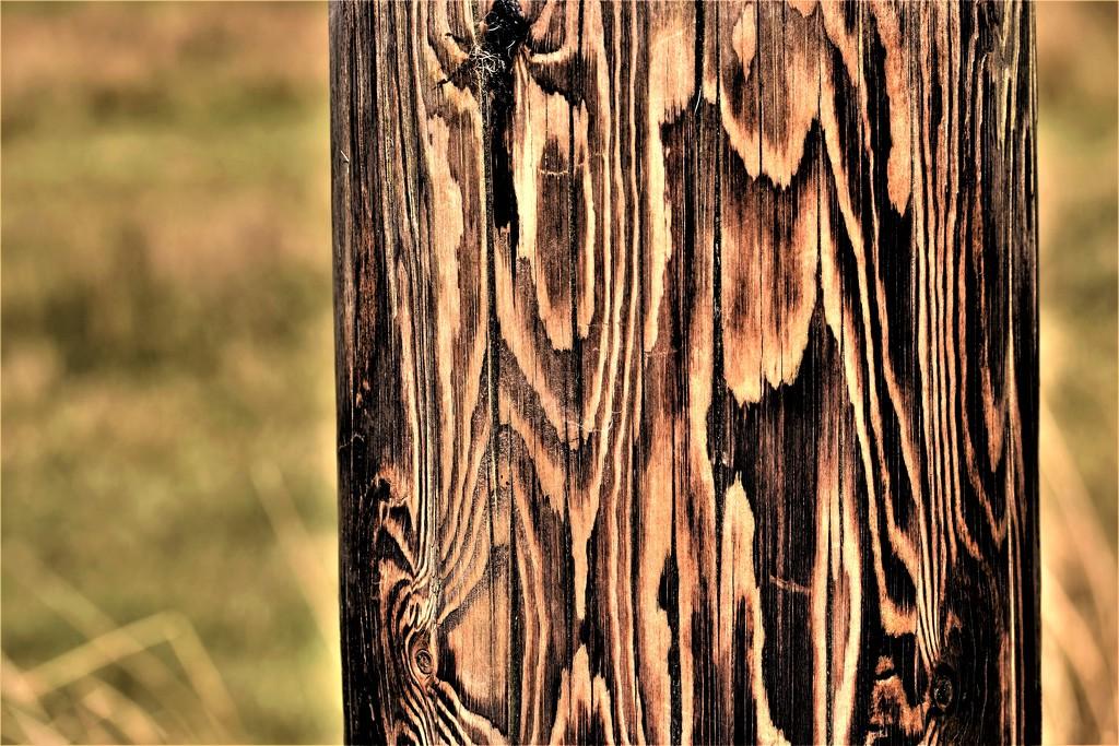 telegraph pole by christophercox