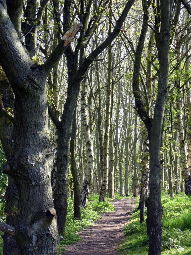 Spud Wood by cmp