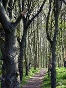 20th Apr 2020 - Spud Wood