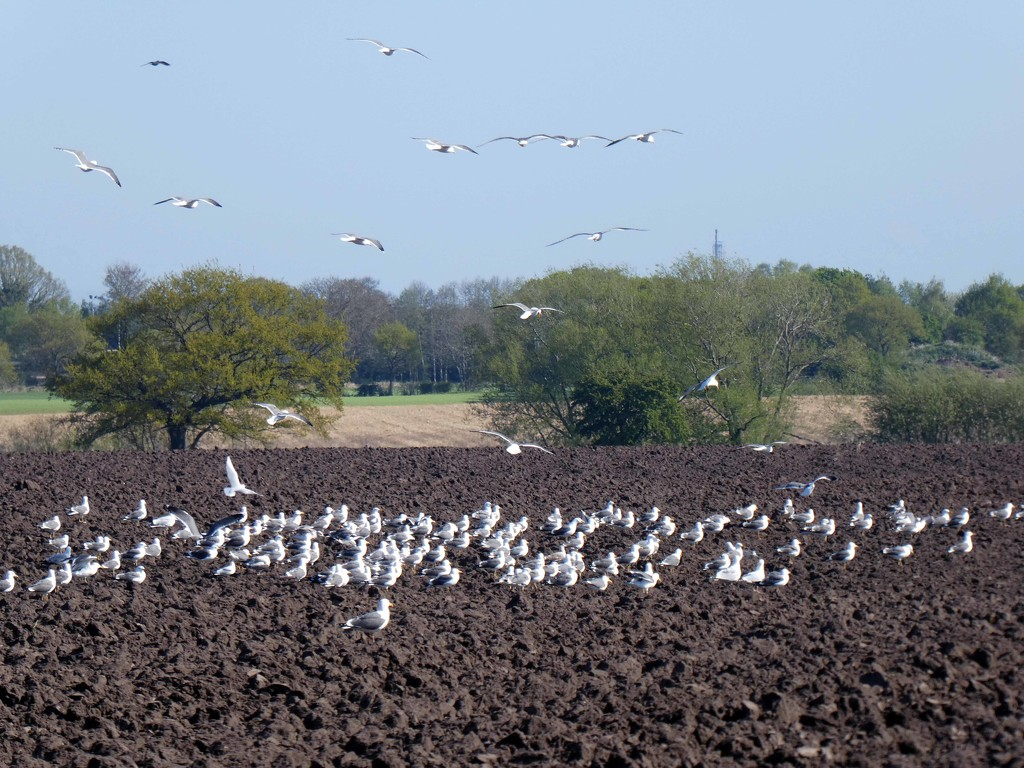 A Flock of Seagulls by cmp