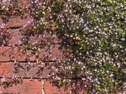 22nd Apr 2020 - A sun warmed brick wall...