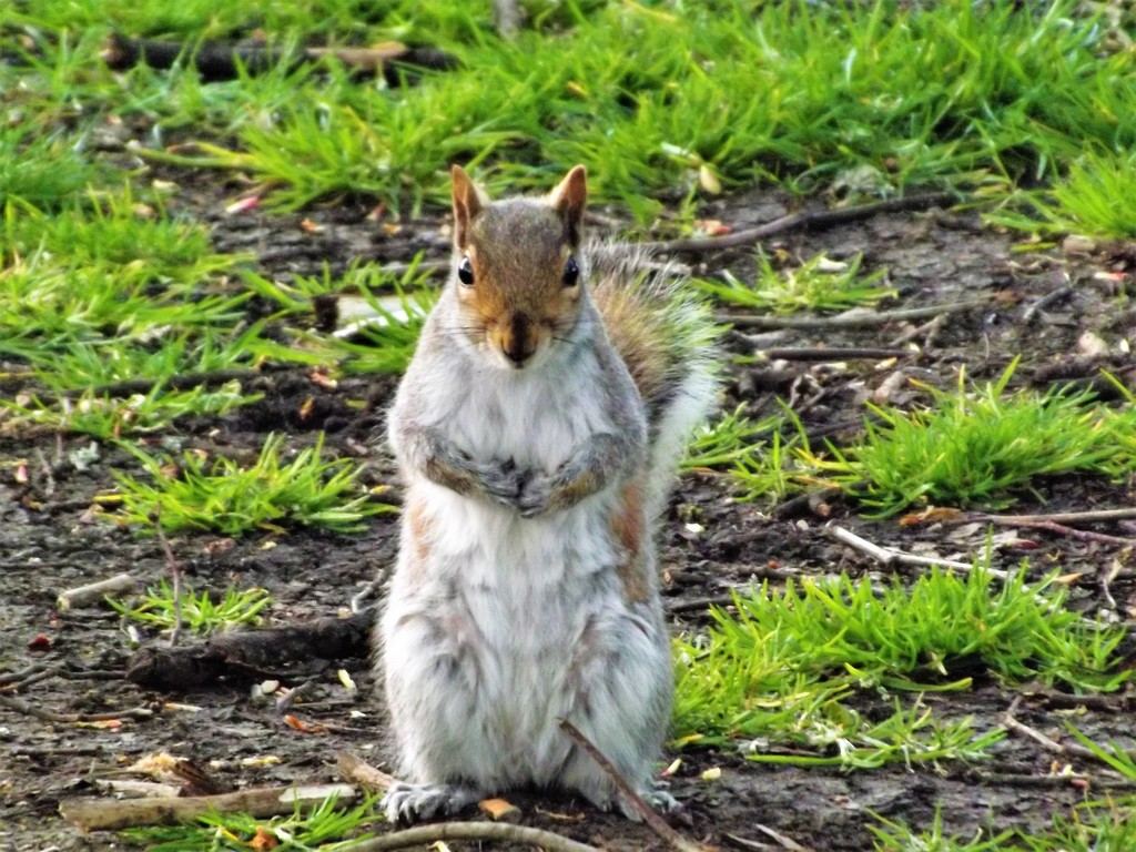 Please sir may I have another nut...... by ajisaac