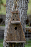22nd Apr 2020 - The Newest Birdhouse...