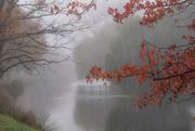 23rd Apr 2020 - Foggy autumn day