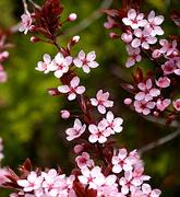 19th Apr 2020 - Springy Spring