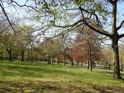 22nd Apr 2020 - Trees in The Forest Recreation Ground