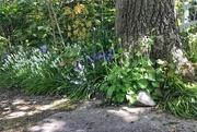 23rd Apr 2020 - A little corner of the garden.