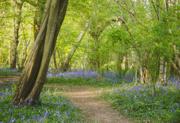 23rd Apr 2020 - Blue Walkway