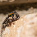 Jumping Spider by yorkshirekiwi