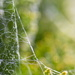 What a wicked web we weave. by kgolab