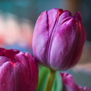 24th Apr 2020 - Flowers