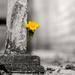 Dandelion by leonbuys83