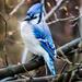 True Blue  by mzzhope