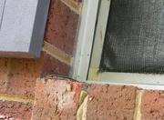 24th Apr 2020 - Salamander on Windowsill