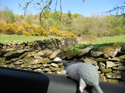 24th Apr 2020 - I go for a walk; I take the rat with me; I forget to take a picture of the rat