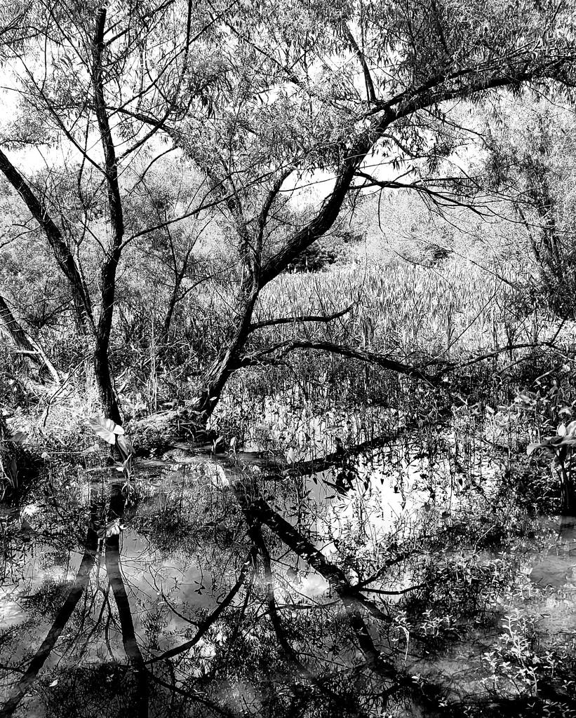 Reflection in Black & White  by morrij10