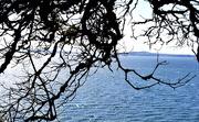 25th Apr 2020 - Tree and Sea