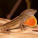 Lizard Throat! by rickster549