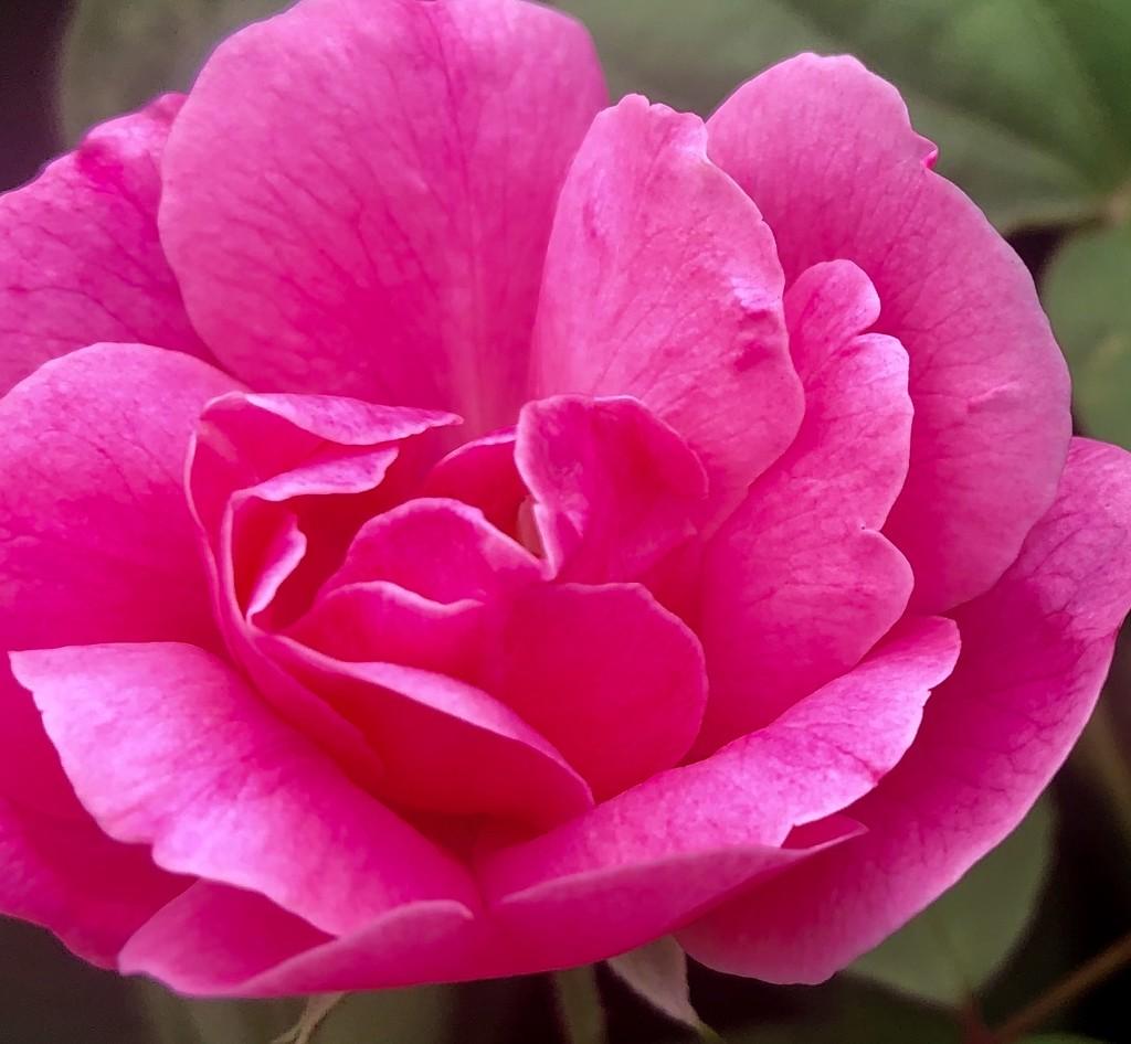 Pretty in Pink by kaylynn2150