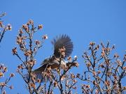 26th Apr 2020 - Bluebird