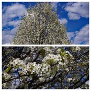 26th Apr 2020 - Spring flowers