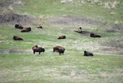 26th Apr 2020 - National Bison Range