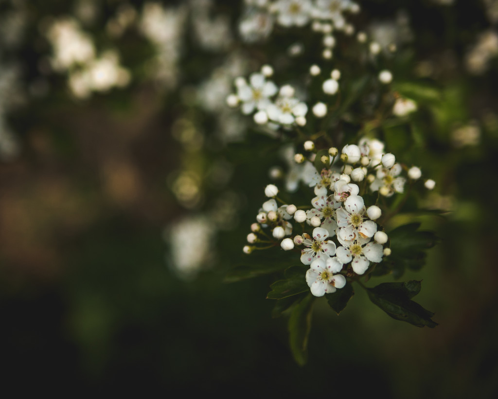 Blossom by newbank